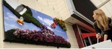 Banrock Station: цветущий биллборд.