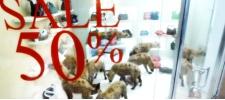 bidorbuy.co.za: в магазинах джунгли!