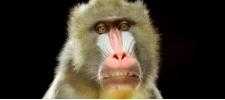 Costa: обезьяны и печатные машинки.