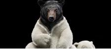 Fiat 500 Black Jack: медведь и пантера в теле плюшевой игрушки