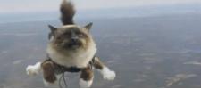 Folksam и страхование ради котов.