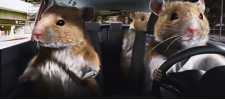 Kia Soul: Hamsters.  .