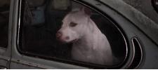 Martin Usborne: портреты псов в автомобилях.