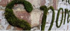 Экологичное граффити. Mossenger