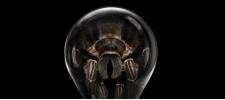 Лампы против насекомых. Philips. Принты.