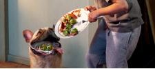 Purina: хватит кормить питомцев объедками.