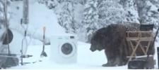 Samsung EcoBubble и медведь.
