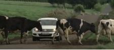 Volkswagen Tiguan: Поход.